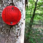 9-12-13: Indian Hill, Furnace, Warbler