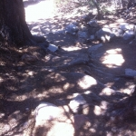 203-root-steps-jpg