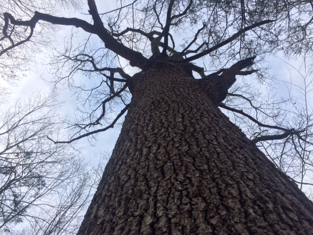 tree-g-pond